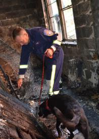 Daisy, an accelerant detection canine from Westchester County, New York works a fire scene with her partner Detective John V. Peters.